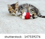 Stock photo little kitten playing with ball of wool 147539276