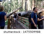 07/27/2019 - Sequoia Park, CA: Unidentified group of tourist and visitors at the giant sequoias park in California. - stock photo