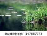 Nature Purity Grass On The...