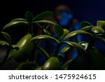 Stock photo blurry bigfoot peaking through plant life against a dark background with colored gels 1475924615