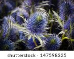 Thistle Flower Background....