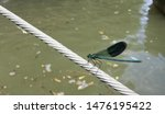 Blue Dragonfly Sitting On Wire...