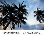 Silhouette Of Tropical Palm...