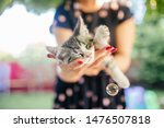 Stock photo cute grey and white kitten sleeps on womans hands in a dress and wearing red nails outside woman 1476507818