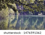 Stock photo irabia reservoir in the selva de irati navarra spain 1476591362