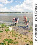 Small photo of BRUINISSE, THE NETHERLANDS - AUGUST 7, 2019: Unidentified man and woman stoop to look for cockles in the bottom of the Oosterschelde estuary. They use a small rake as a tool.