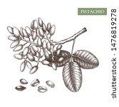 pistachio vector illustration.... | Shutterstock .eps vector #1476819278