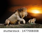 close male big lion and cub on... | Shutterstock . vector #1477008308