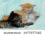 Stock photo three kittens sleeping cute kittens indoors pets animals concept 1477077182