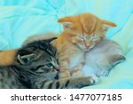 Stock photo three kittens sleeping cute kittens indoors pets animals concept 1477077185