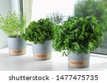 Seedlings Of Different Aromatic ...