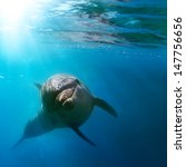 tropical marine life with wild...   Shutterstock . vector #147756656