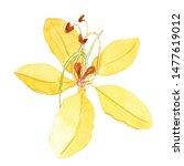 Watercolor Hand Drawn Cassia...