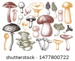 Hand Sketches Mushrooms...