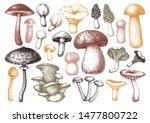hand sketches mushrooms...   Shutterstock .eps vector #1477800722