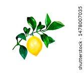 isolated lemon on a branch.... | Shutterstock . vector #1478007035