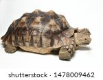 Stock photo african spurred tortoise also know as african spur thigh tortoise geochelone sulcata isolated on 1478009462