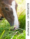 Young Horse Resting In Grass O...