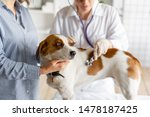 Stock photo the veterinarian listens to the dog with a stethoscope 1478187425
