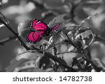 Pink Colorized Butterfly On...