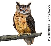 Stock photo digital painting in oil painting style eagle owl 147831008