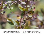 Stock photo dragonflies perched on the branch tree and flowers 1478419442