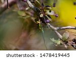 Stock photo dragonflies perched on the branch tree and flowers 1478419445