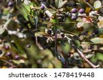 Stock photo dragonflies perched on the branch tree and flowers 1478419448