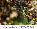 Stock photo dragonflies perched on the branch tree and flowers 1478435765