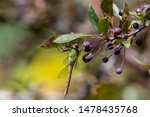 Stock photo dragonflies perched on the branch tree and flowers 1478435768
