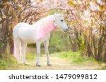 Unicorn. Photo Of A Snow White...