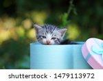 Stock photo cute little kitten in a gift box cute kitten in nature 1479113972
