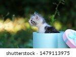 Stock photo cute little kitten in a gift box cute kitten in nature 1479113975