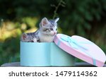 Stock photo two cute kittens in a gift box cute kittens in nature 1479114362