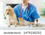 Stock photo vet examining dog and cat puppy and kitten at veterinarian doctor animal clinic pet check up and 1479230252