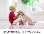 Stock photo child with baby dog kids play with puppy little boy and american cocker spaniel at couch pet at 1479239162