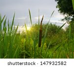 Cattail Growing Beside A Green...