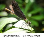 Stock photo dragonfly on a leaf in nature 1479387905