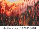 close up white flower in field... | Shutterstock . vector #1479415448