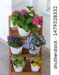 Indoor And Garden Flowers In...