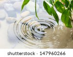 Green Leaves With Reflection I...