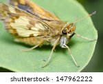 moth on leaf | Shutterstock . vector #147962222