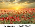 poppy filed on sunset sky...   Shutterstock . vector #147972062