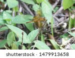 Stock photo closeup of a common dragonfly on a vary small plants stem beautiful dragonfly on a plants stem 1479913658