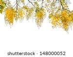 Flower Of Golden Shower Tree...