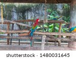 macaws are considered to be the ...   Shutterstock . vector #1480031645