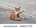 Stock photo red little kitten play on sunny day on summer 148011755