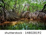 mangroves in the delta of the... | Shutterstock . vector #148028192