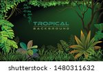 Night Tropical Forest With...
