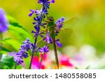 Stock photo dragonflies perched on the branch tree and flowers 1480558085